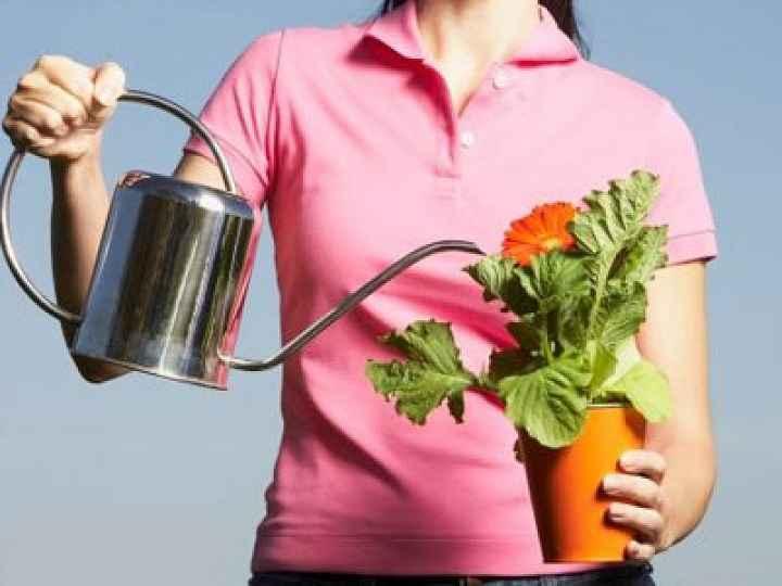 Regar Plantas Nas Férias – Melhores Métodos