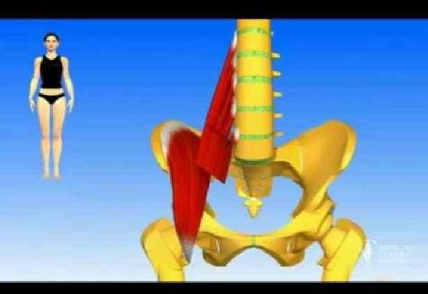 Psoas Músculo da Alma – Problemas e Tratamento