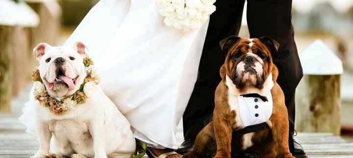 Cachorro No Casamento – Entrega das Alianças