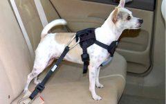 Cinto de Segurança Para Pets – Como Usar