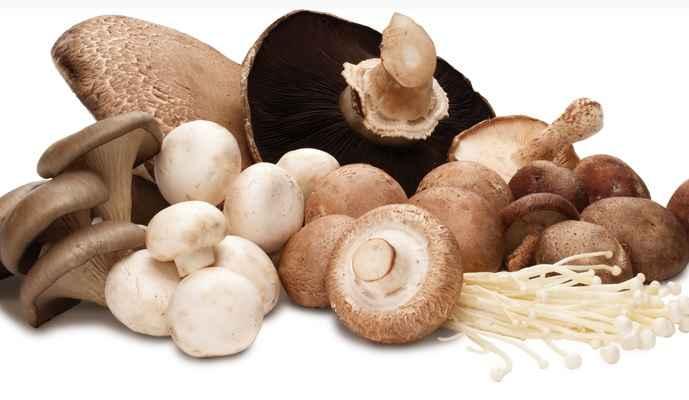 Cogumelos – Benefícios Para Saúde
