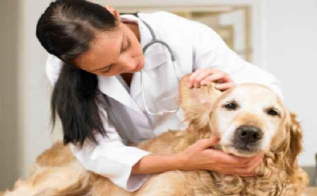 Sarna Em Cães – Tipos e Tratamento