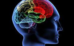 Soro da Memória – Benefícios e Receita