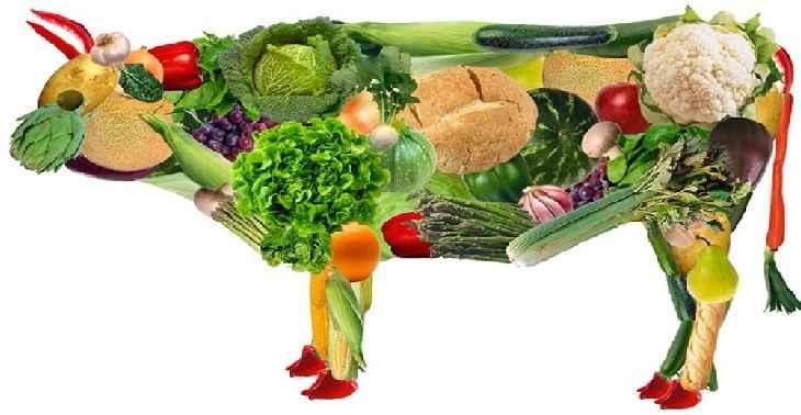 Alimentos Ricos Em Proteína – Para Veganos e Vegetarianos