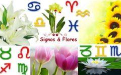 Flores Para Cada Signo do Zodíaco – Preferências