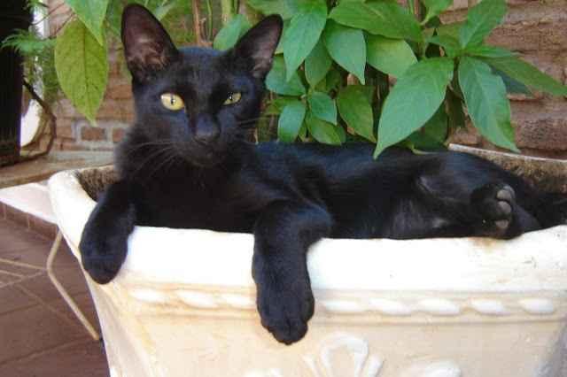 Gatos Longe Dos Vasos – Como Manter