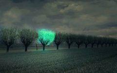 Árvores Que Brilham – Iluminando Cidades