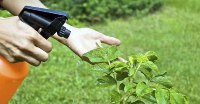 Usar Vinagre No Jardim – Benefícios