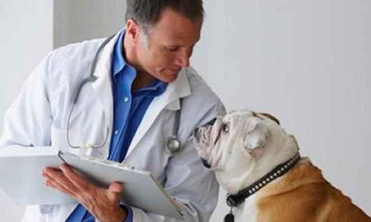 Diabetes Mellitus Em Cães – Sintomas