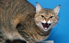 Gato Medroso ou Arisco – Como Acalmar