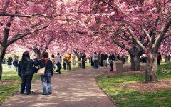 Festa Das Cerejeiras – Local e Datas