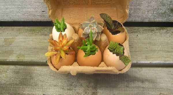Adubar a Terra Com Casca de Ovos – Como Fazer