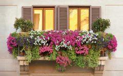Plantas Para Sacadas – Como Escolher