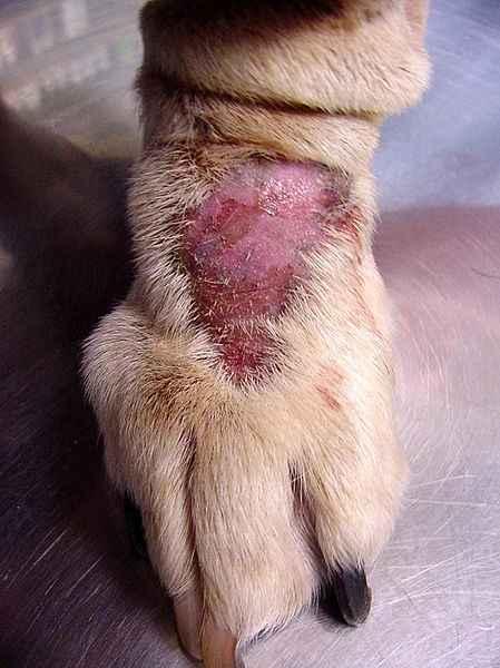 Coceira Em Cães – Como Prevenir