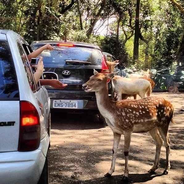 Passeio No Zoo Safári Em São Paulo – Dicas