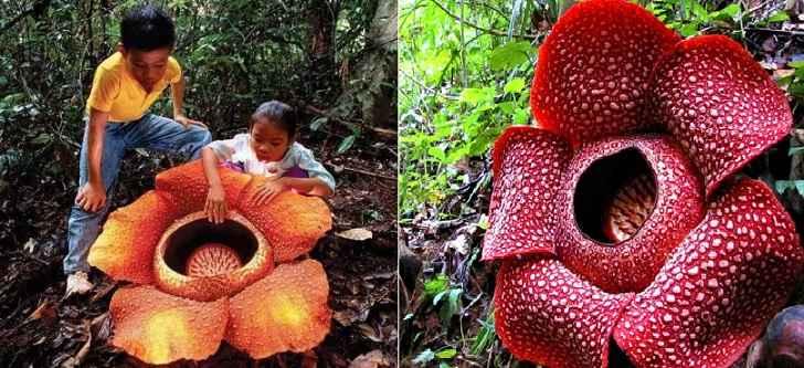 Plantas Exóticas – Algumas Espécies