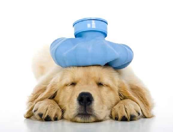 Alimentos Proibidos Para Cães – Dicas