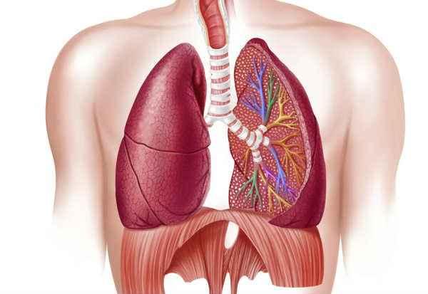 Doença Pulmonar DPOC - Causas