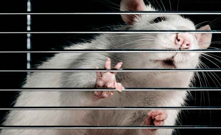 Twister Ratinho de Laboratório – Dicas Como Cuidar