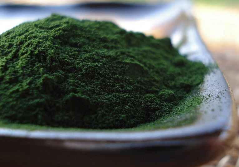Alga Unicelular Chlorella – Benefícios