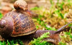 Caracóis na Horta – Como Evitar
