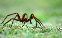Eliminar Aranhas – Dicas Naturais