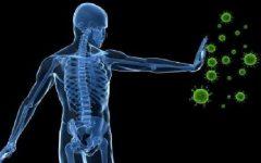 Sistema Imunológico – Dicas Para Melhorar