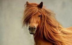 Shampoo De Cavalo Para Cabelos – Como Usar e Receita