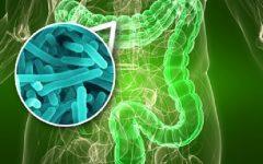Bifidobactérias – Beneficios