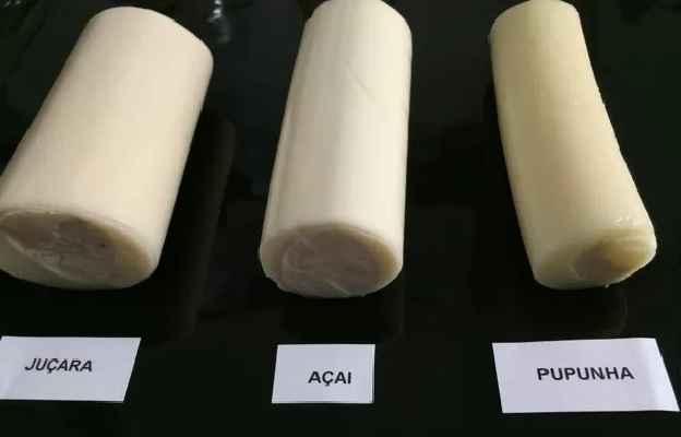 Tipos de Palmito – Como Escolher