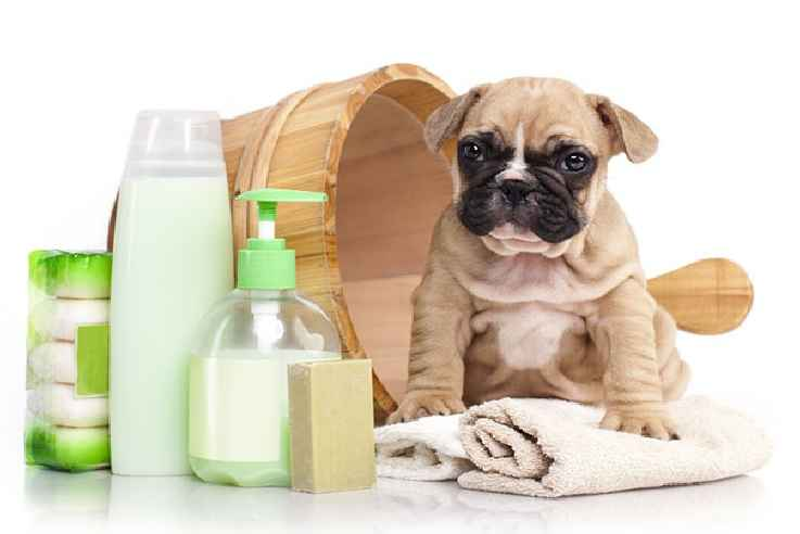 Enxoval Para Cachorro – Dicas