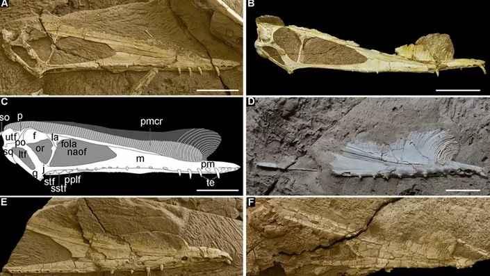 Ovos de Pterossauro – Nova Descoberta