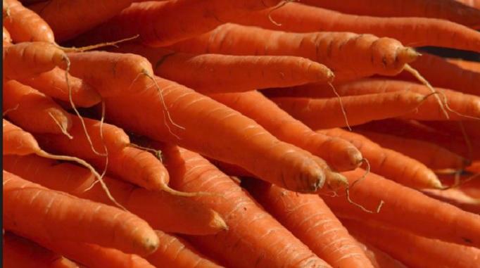 Óleo de Cenoura – Benefícios e Receita Caseira