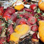 Alimentos Estragados – Perigos e Como Reconhecer