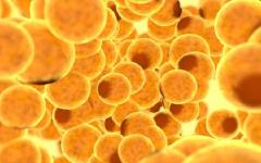 Gordura Marrom – Queima Caloria