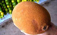 Fruta Cupuaçu – Benefícios
