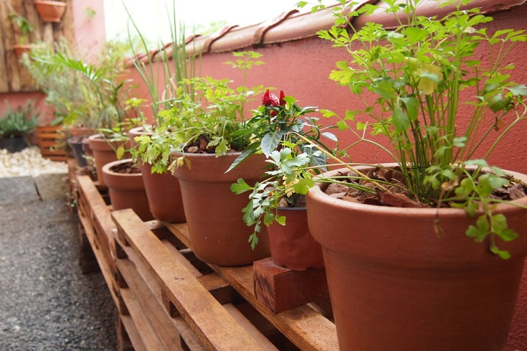 Como Plantar Em Pequenos Espaços - Oficina