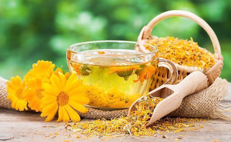 Óleo de Flor Calêndula – Benefícios e Como Usar