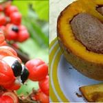 Dieta Amazônica – Alimentos