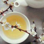 Chá Branco Para Queimar Gorduras – Benefícios e Receitas