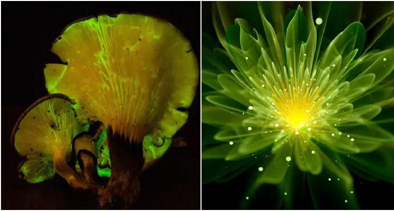 Plantas Podem Iluminar Casas do Futuro – Pesquisa