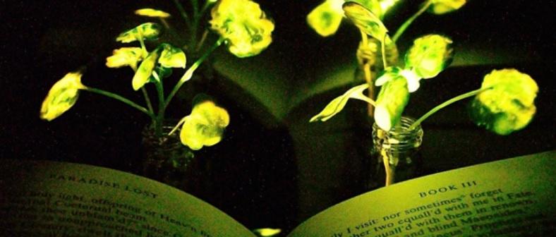 Plantas Podem Iluminar Casas do Futuro - Pesquisa