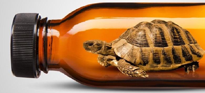 Óleo de Tartaruga – Benefícios