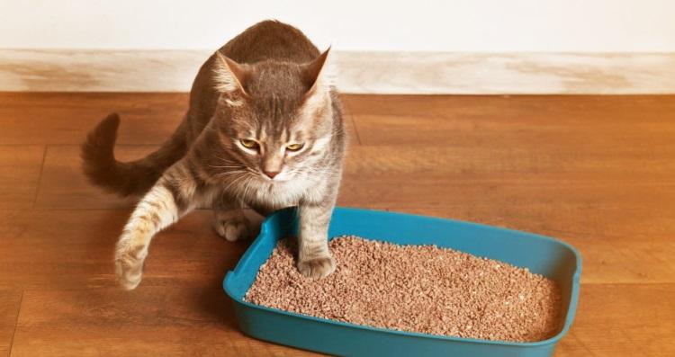Mau Cheiro Na Caixa de Areia Para Gatos – Como Evitar