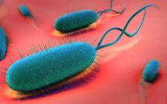 Tratamento Caseiro Para Helicobacter Pylori – Dicas