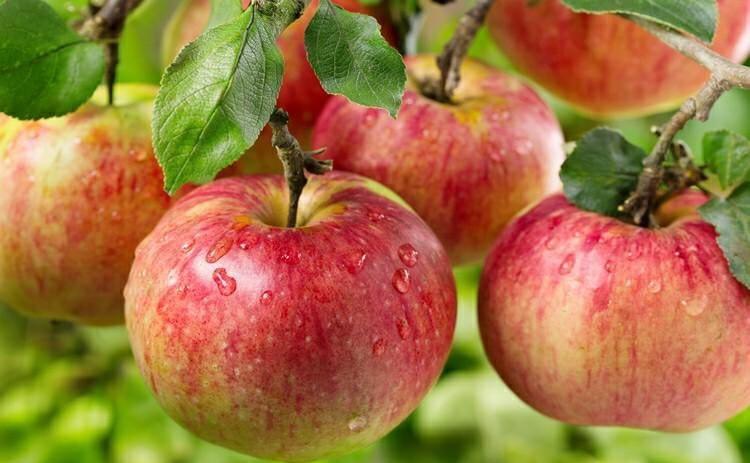 Dieta da Maça – Como Fazer e Benefícios