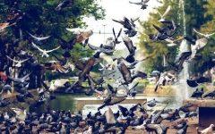 Doenças Transmitidas Por Pombos – Tipos e Sintomas