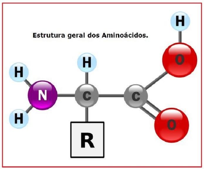 Aminoácidos Essenciais – Funções e Alimentos