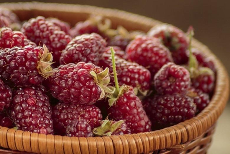 Frutas Híbridas - Quais São