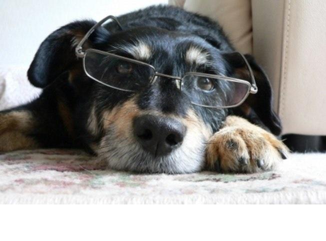 Papinha Para Cachorros Idosos - Dicas
